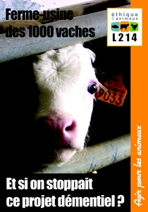 1000vaches