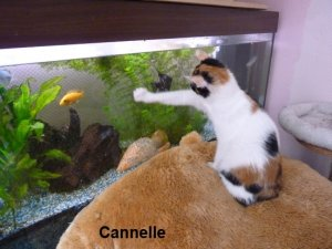 Cannelle 2 site