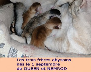 titreMONSITEchatons