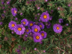 ASTER n.a 'Christopher Harbut'