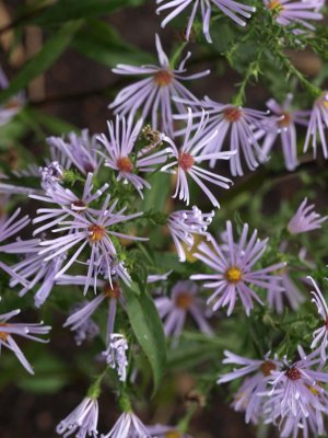 ASTER X 'Chilly Fingers' (2)